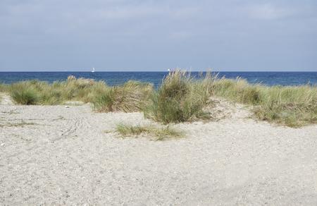 dunes: sand dune