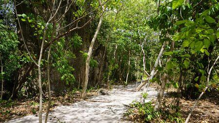 nang: amazing green nature in thailand near ao nang Stock Photo