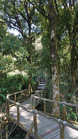 doi: amazing green nature in doi inthanon national park in thailand