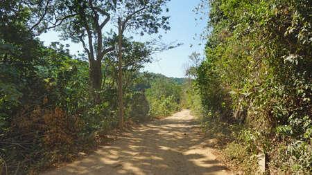 unaffected: green rainforest on ko lanta island in thailand