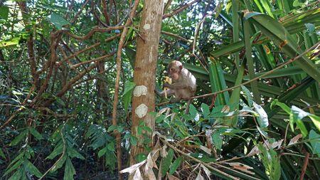 unaffected: wild monkeys in asian rainforest