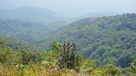 doi: amazing green landscape in doi inthanon national park