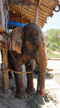 ko: elephant park on ko lanta island in thailand