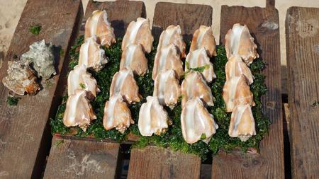 santa maria: fresh sea shells in santa maria