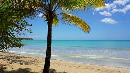 dominican: bonita beach on samana in the dominican republic