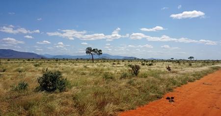 green natural landscape in kenyan safari park after raining season Stock Photo