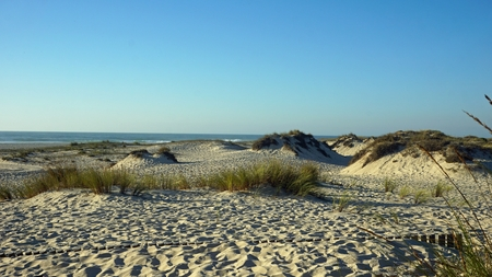 scenic landscape with the sand dunes of portugal Standard-Bild - 114258333