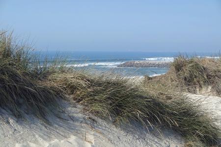 sand dunes at the beach costa nova in aveiro Standard-Bild - 114258334