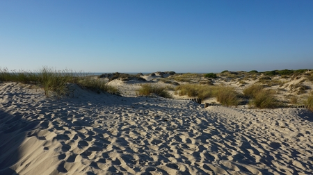 scenic landscape with the sand dunes of portugal Standard-Bild - 114258336