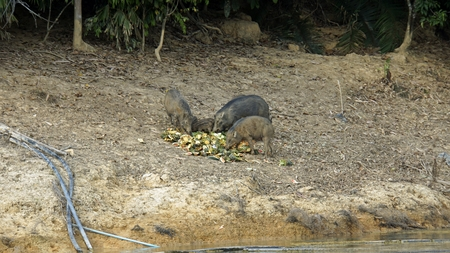 wildlife in khao sok in thailand Standard-Bild - 120714386