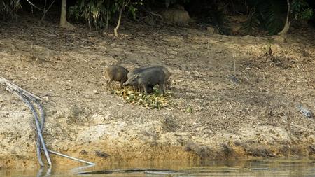 wildlife in khao sok in thailand Standard-Bild - 120714483