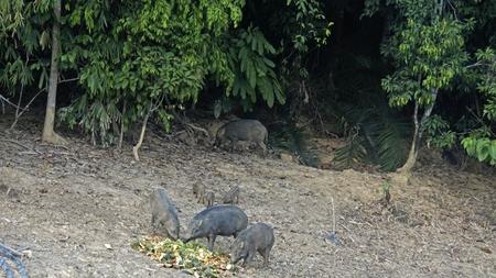 wildlife in khao sok in thailand Standard-Bild - 120714526