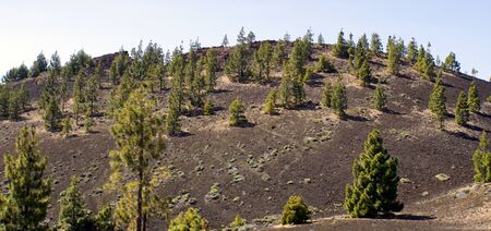 rough volcanic landscpae on teide volcano on tenerife