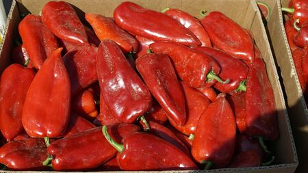 fresh chilies and peppers from the market of skopje