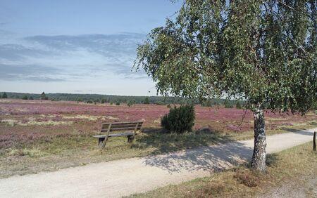 rest on a bench in beautyful nature Reklamní fotografie