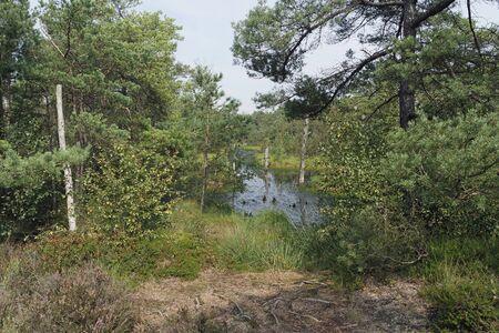 muddy swamp land pietzmoor in northern germany Reklamní fotografie