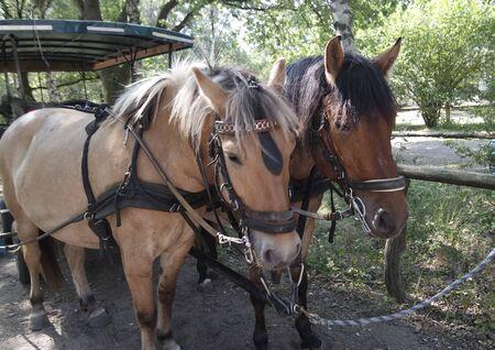 horseback ride coach in lueneburg in germany Banco de Imagens - 131825654