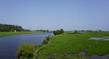 large rice fields around hue in vietnam Reklamní fotografie