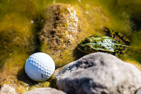 A Frog and a golf ball in a pond