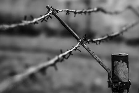 A barbed wire