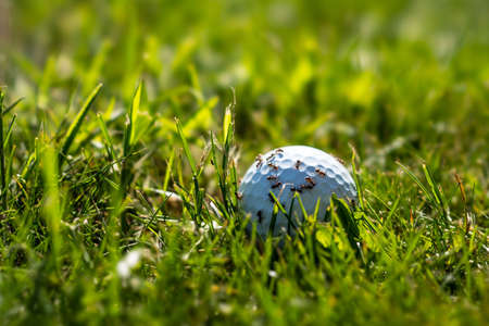Ants on a golf ball