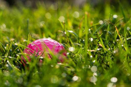 A pink golf ball on a meadow. Фото со стока
