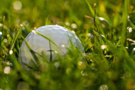 A golf ball lies in the rough.
