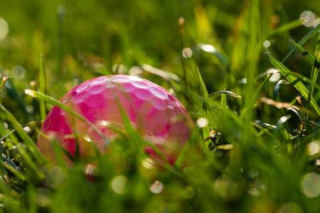 A pink golf ball lies in the rough.