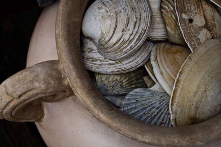 Display of sea shells in vase.