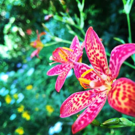 eye: Wild flowers along a hiking trail