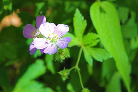 purple flower: Pretty purple flower
