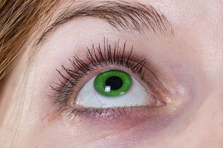 eye green: De ojos verdes - foto de un ojo verde