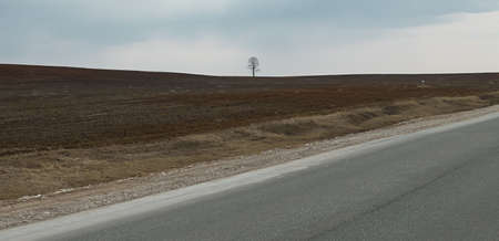 aloneness: Image of lonely tree in early spring
