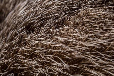 Photo of the rabbits brown fur - macro shot photo