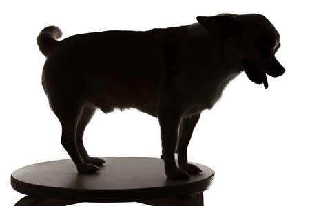 Image of chihuahuas silhouette on white background photo