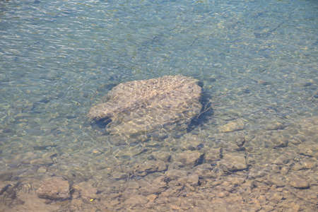rock bottom: Photo of a large rock on the river bottom, summer