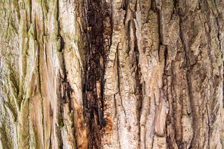 bright colour: Image of bright colour bark of a tree in the summer
