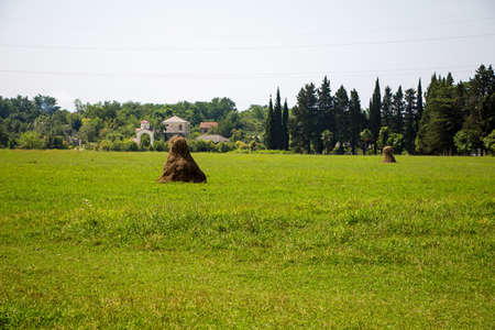 haystack: Photo of brown haystack among green field, summer