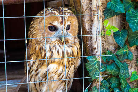 owlet: Owlet is sitting in cage. Travel photo in the summer.