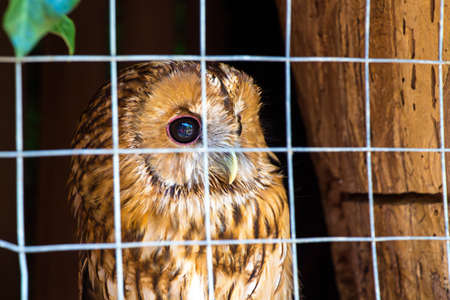 looking behind: Owl is sitting in cage and looking behind. Travel photo in the summer.