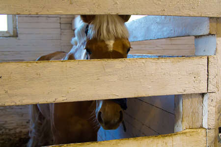 corral: Horse in stable corral. Photo of stable.