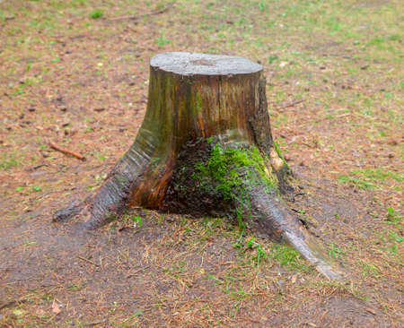 Photo of stump tree