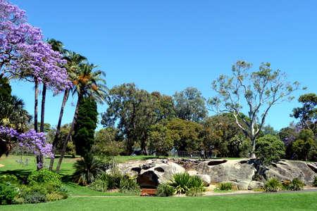 botanic: Sydney Botanic Garden