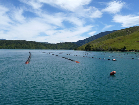 sounds: mussel farm in the Marlborough Sounds, New Zealand