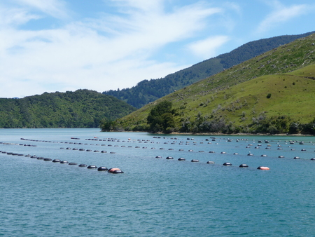 mussel farm in the Marlborough Sounds, New Zealand