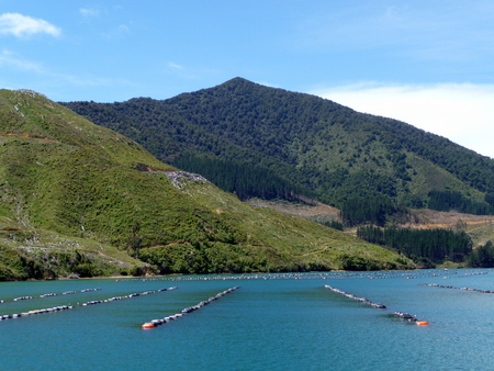 marlborough: mussel farm in the Marlborough Sounds, New Zealand