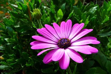 purple flower blooming in garden
