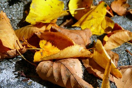yellow and brown leaves in autumn Standard-Bild