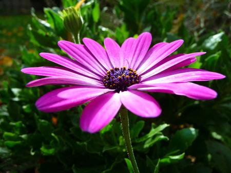 purple flower Standard-Bild