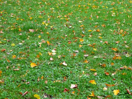 green grass with some leaves in autumn